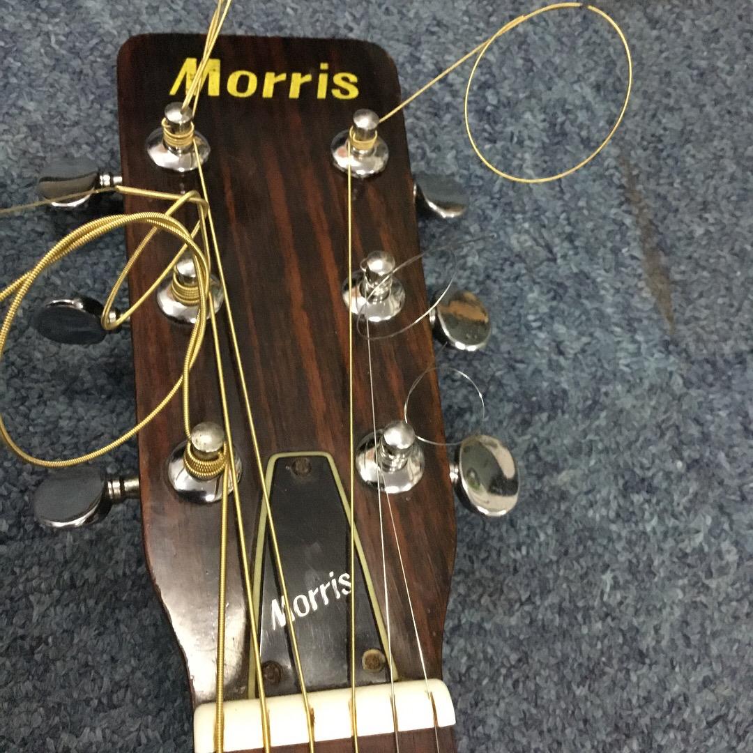 Guitar Acoustic Morris F15 2
